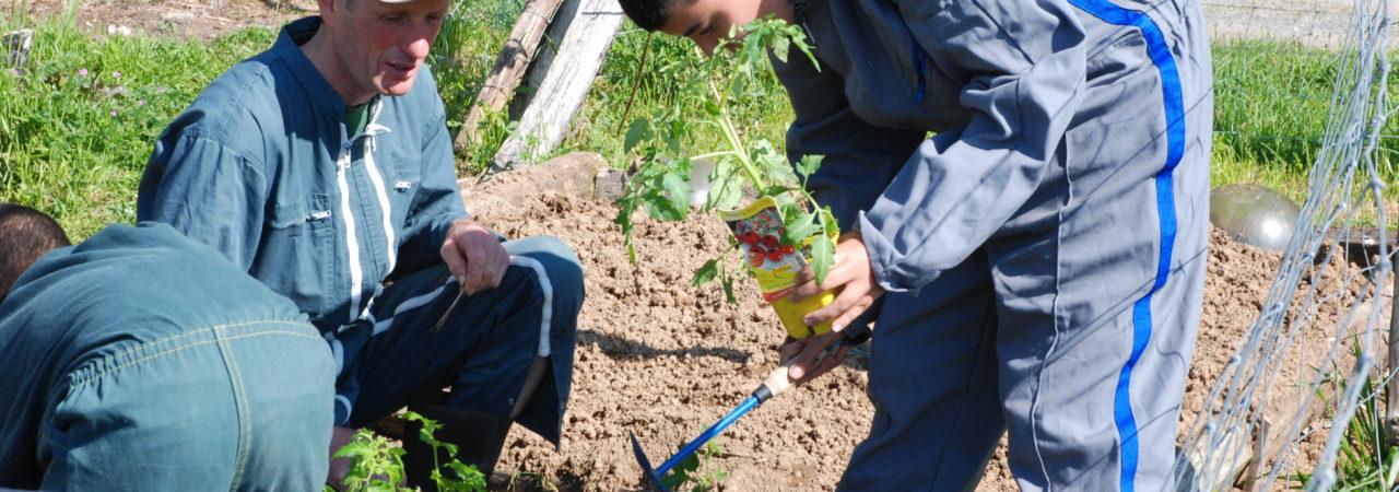 Agriculture de notre région : terres d'insertion de personnes vulnérables