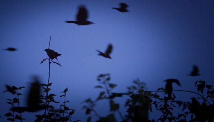 La balade des oiseaux