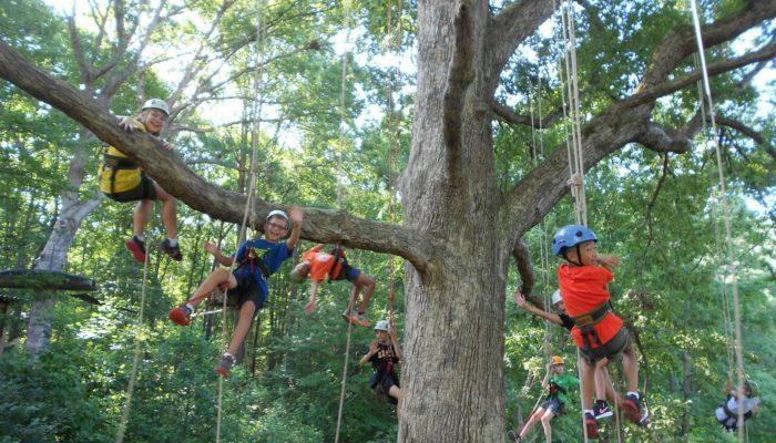 Atelier initiation : grimpe dans les arbres